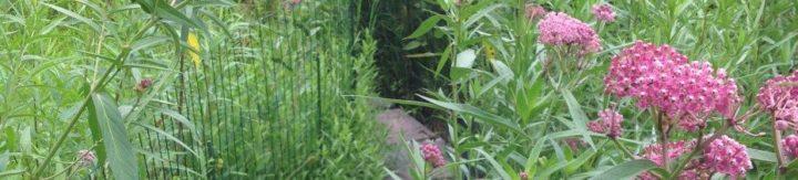 Stone path through garden