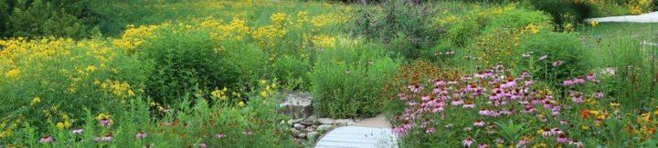 Path through a garden