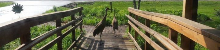 A pair of Sandhill cranes on the ramp to the WILD Center